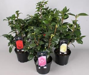 Shrubs and Seasonal Garden Plants
