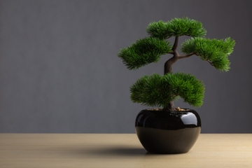 Bonsai and Lucky Bamboo