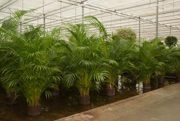Specimen-Houseplants